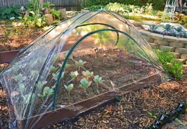 17 best images about temporary greenhouse on pinterest for Bhg greenhouse