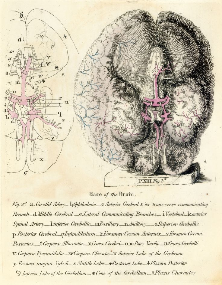 Ramsay Plates of the Brain 1812  Royal Society
