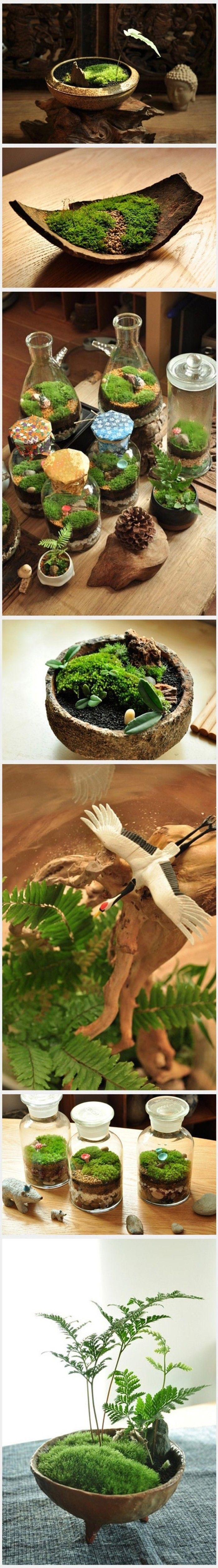Miniature pot wood and plants succulents