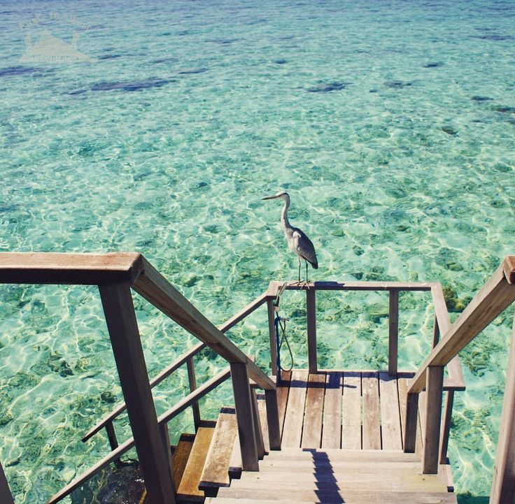 Hello there يا طير يا طاير على أطراف الدني #easttowestadventures # Maldives #blogger #travelphotography To know more about our trip to the Maldives check the blog لمعرفة المزيد عن رحلتنا إلى جزر المالديف يمكنك قراءة المدونة على الرابط http://www.easttowestadventures.com/en/