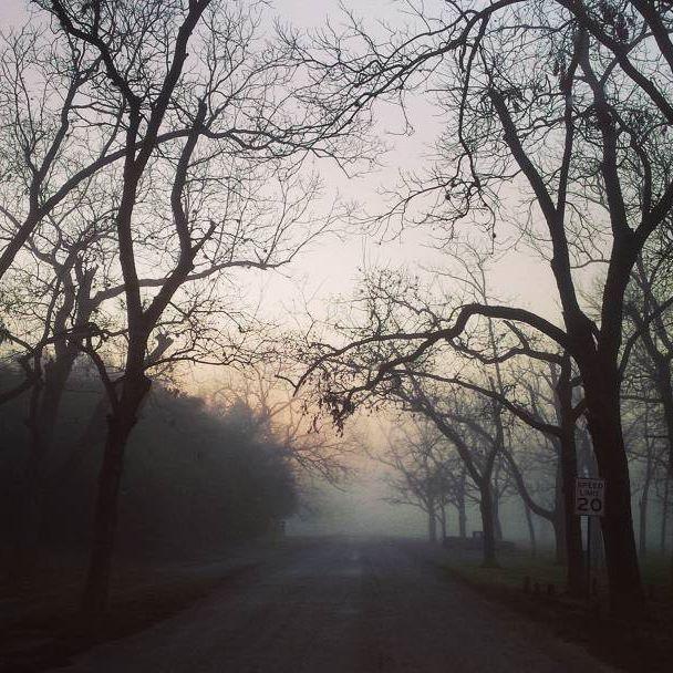 Road less traveled #photography #naturephotography #trees #outdoors #forrest #natural #fog #roadlesstraveled