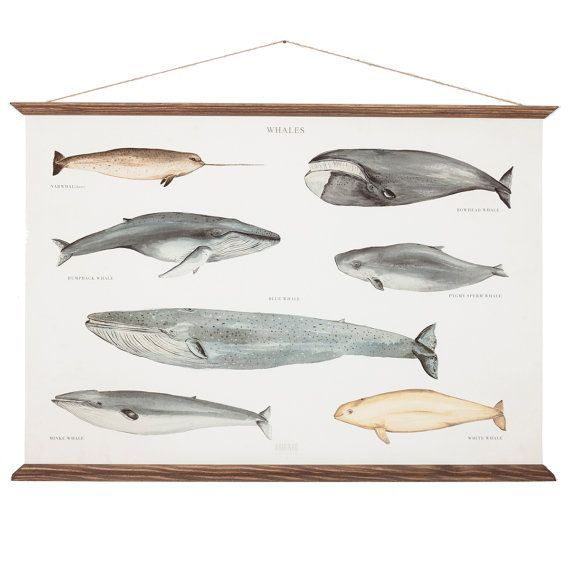 A2 Baleines Poster Canvas - taille moyenne - la main vintage inspiré illustration de graphique illustration pédagogique mur WAPA2002