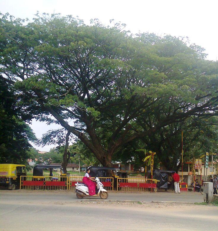 Chikmagalur, India.