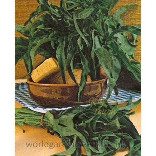 Spigariello Broccoli - Minestra Nera