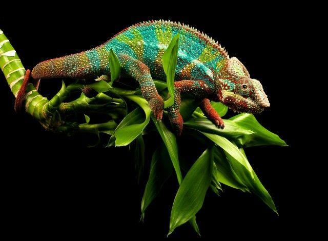 Magnifique ce que la nature nous offre comme palette de couleur !