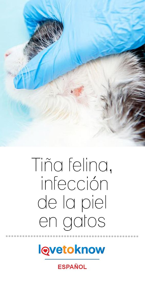 infección de piel por arañazo de gato