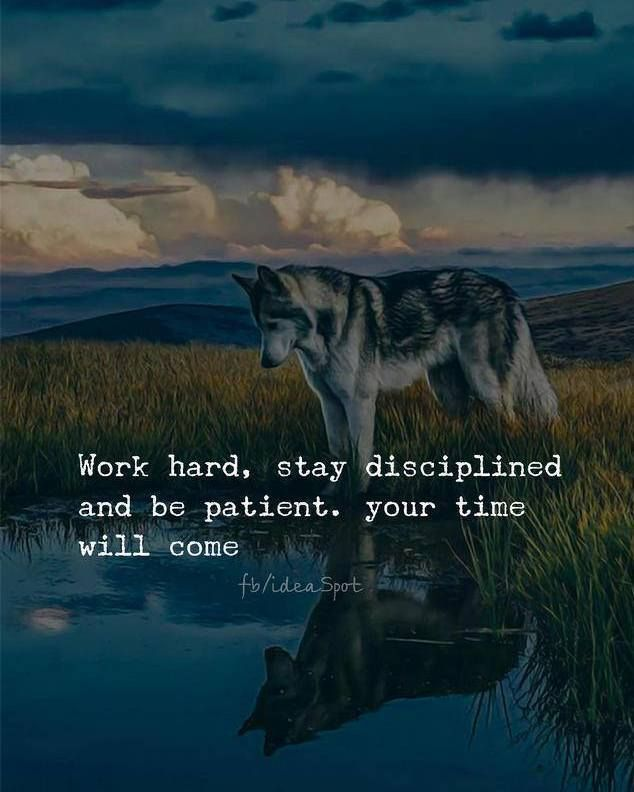 Work Hard Stay Disciplined And Be Patient Your Time Will Come Entrepreneurship Business Quote Etlos Busin Hard Work Quotes Work Quotes Good Life Quotes