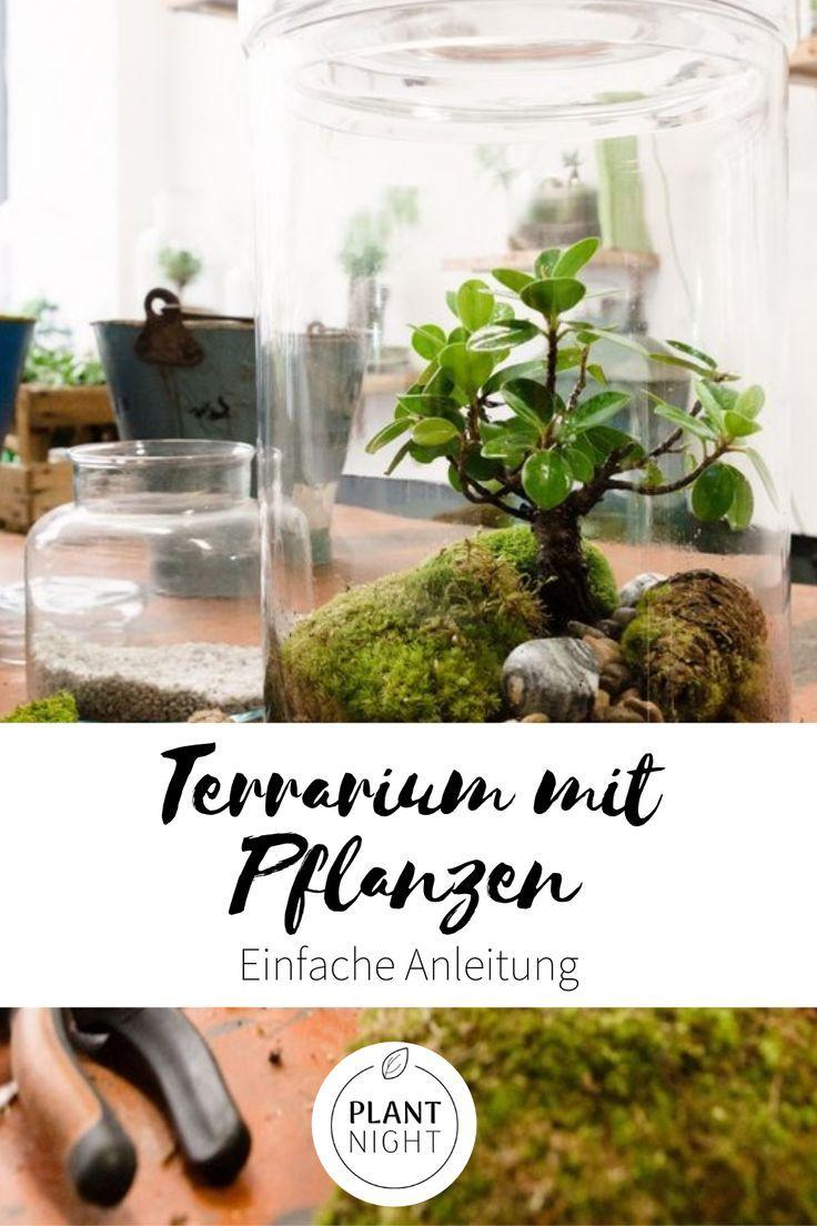 Terrarium Mit Pflanzen Diy Oase Im Glas Terrarium Pflanzen Pflanzen Terrarium