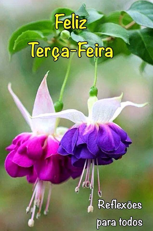 """🌸Bom dia, ótima Terça-feira! Acesse: """"Flores ... inverno"""" (clique) #flores"""