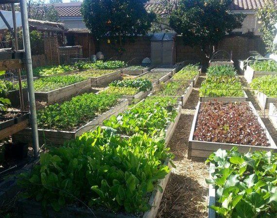 Теплые грядки для беЗпахотного земледелия за 12 шагов — Клуб практиков «Жизнь на земле»