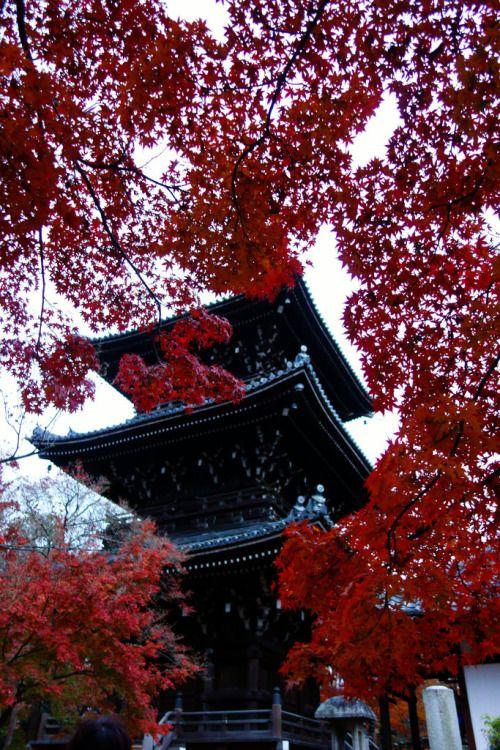 Kyoto by suizou osaka