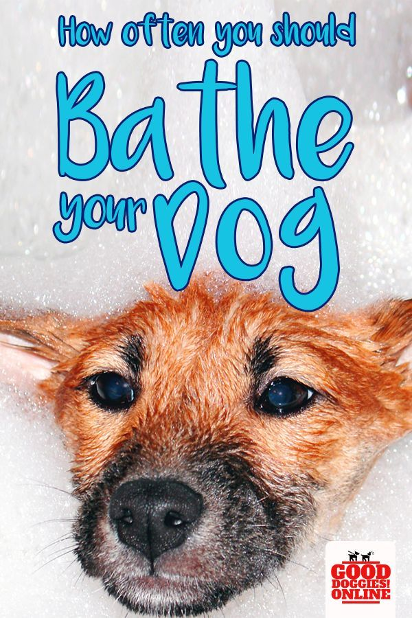 How Often To Bathe A Dog Dog Health Tips Dog Care Smelly Dog