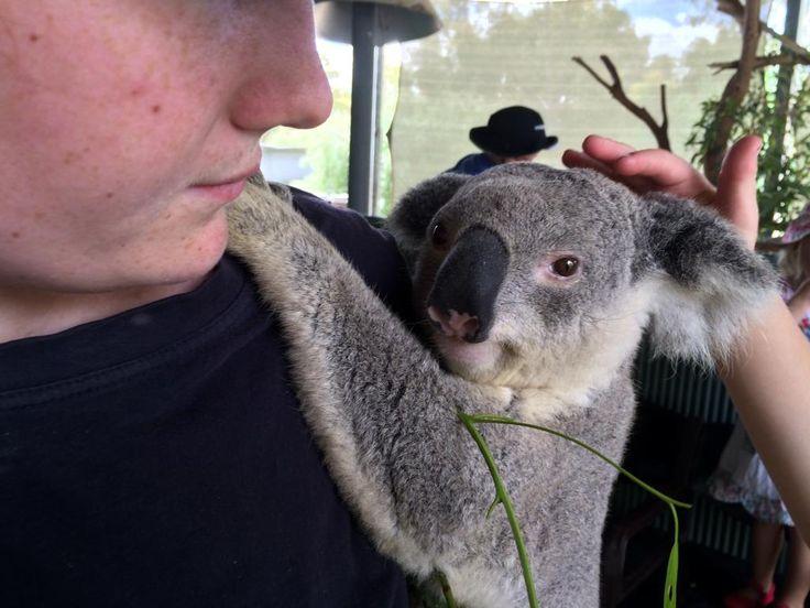 Cohunu Koala Park, Byford - Blog | - FREE online guide for families