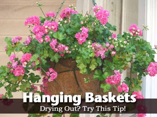 hanging-basket-2-050913  how to keep hanging baskets from drying out
