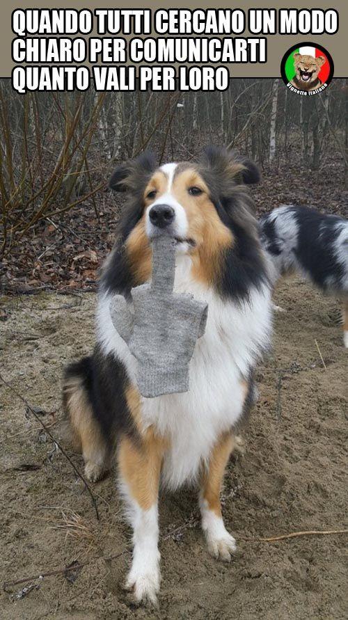 - Comunicazione canina