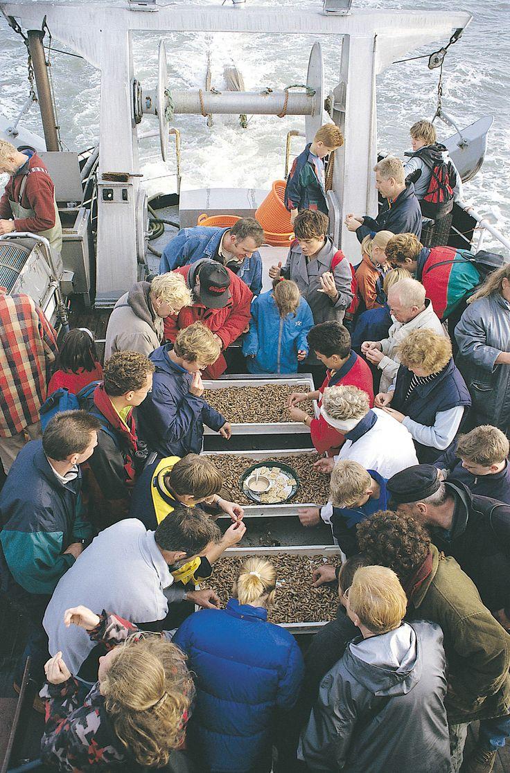 Tips voor Kids Texel is een ideaal vakantie-eiland voor kinderen. Er is zo veel te beleven! Mee met een garnalenkotter.