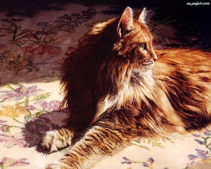 Rysunek, Norweski, Kot, Leśny