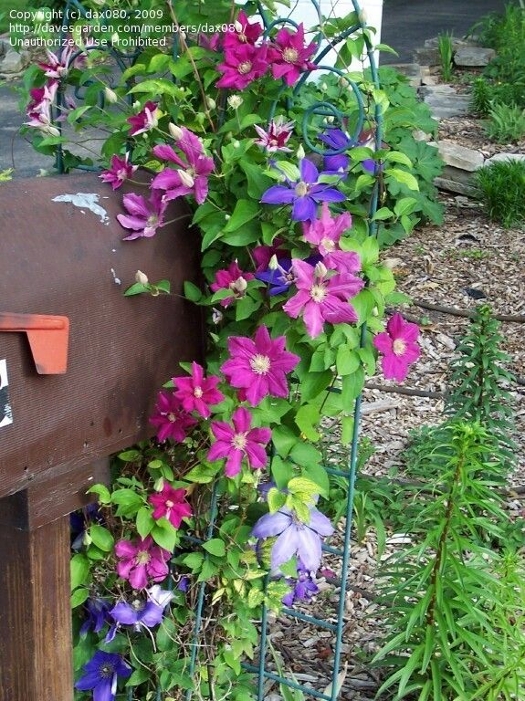 Mailbox Landscaping Ideas | Beginner Landscaping: dax080 picture (Mailbox Plantings)