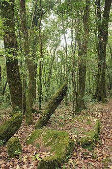 A sacred grove or sacred woods are any grove of trees of special religious importance to a particular culture. Sacred groves feature in various cultures throughout the world. Examples of sacred groves include the Greco-Roman temenos, the Norse hörgr, and the Celtic nemeton, which was largely but not exclusively associated with Druidic practice.