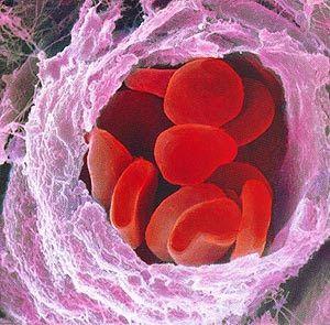 O Tecido  sanguíneo é formado por duas partes: Primeiro a parte sólida formada pelas células sanguíneas , onde podemos encontrar os glóbulos vermelhos, os glóbulos brancos e as Plaquetas . Segundo por uma parte líquida na qual tais células estão dispersas, chamado Plasma. Todas as células do sangue são originadas na medula óssea vermelha a partir das células indiferenciadas células-tronco.