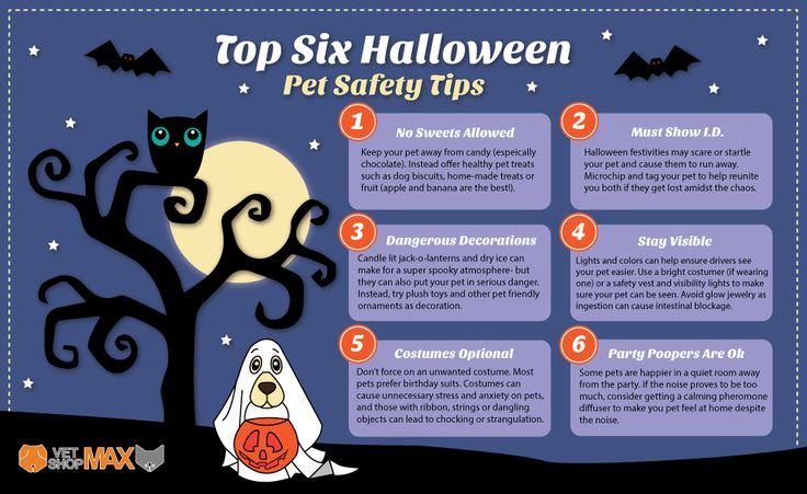 These top Halloween pet safety tips will keep your pets safe, and you happy.