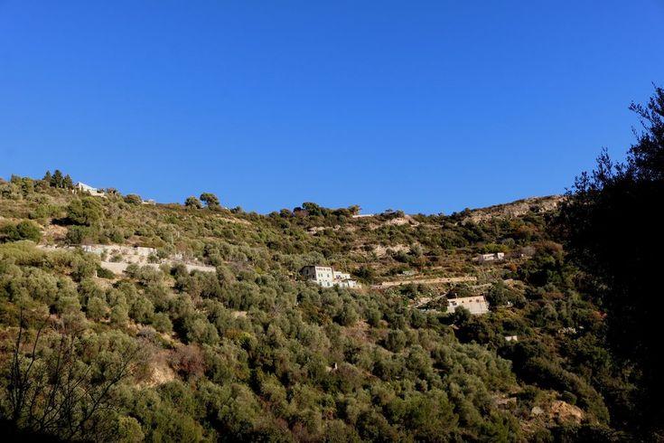 Camporosso (IM), Strada Valloni - una vista verso la collina