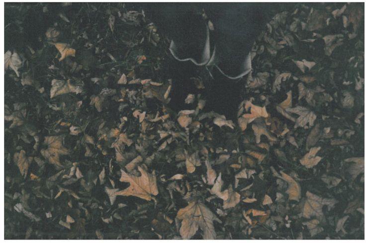 Marta Nowak - Lomografia 2014 #lomo #photo #komwiz #leaves