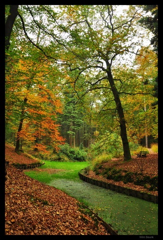 Nature in Hellendoorn, Netherlands (autumn) - a photo by Wimagen
