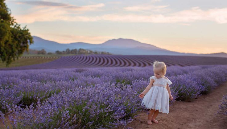 Birdstowe Lavender Farm - secret spot in Tasmania. Holidays with Kids are the family travel specialists