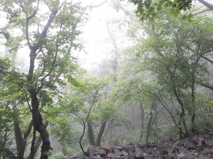 안개 숲: Photo