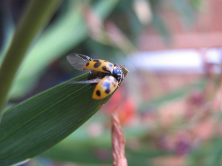 Ladybug love by Esté Smit.