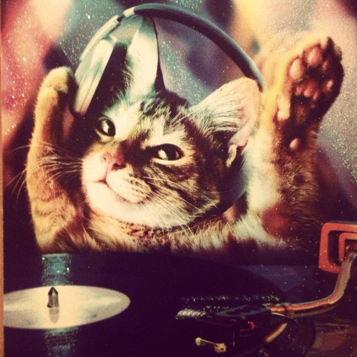 Cute dj kitty   Ravers #edm