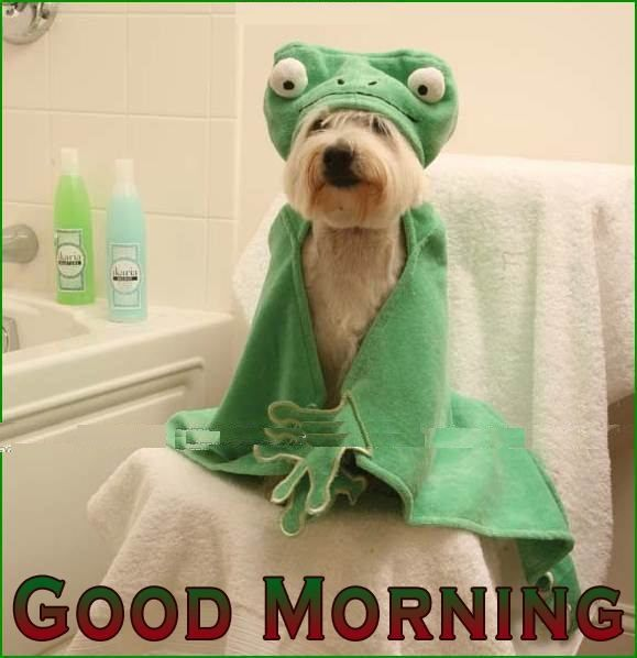 Funny Good Morning Pictures for Facebook