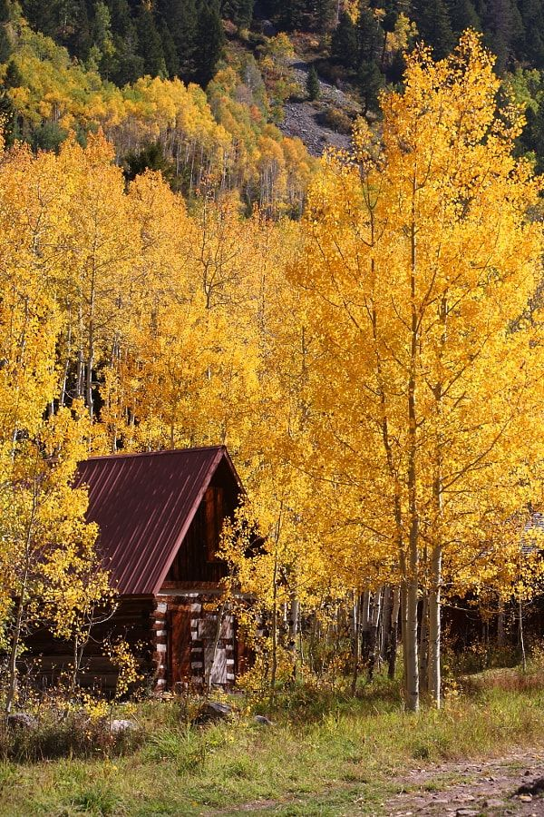 Colorado Autumn by Gritty Lens / 500px
