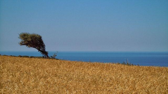 """Α lonely tree """"floating"""" over the Libyan Sea, on the Asterousia Mountains #Crete"""