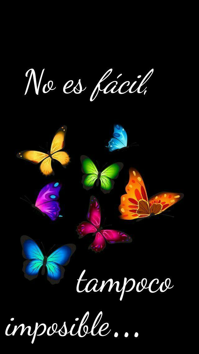 Mariposas Frases Inspiradoras Cortas Frases Bonitas Y