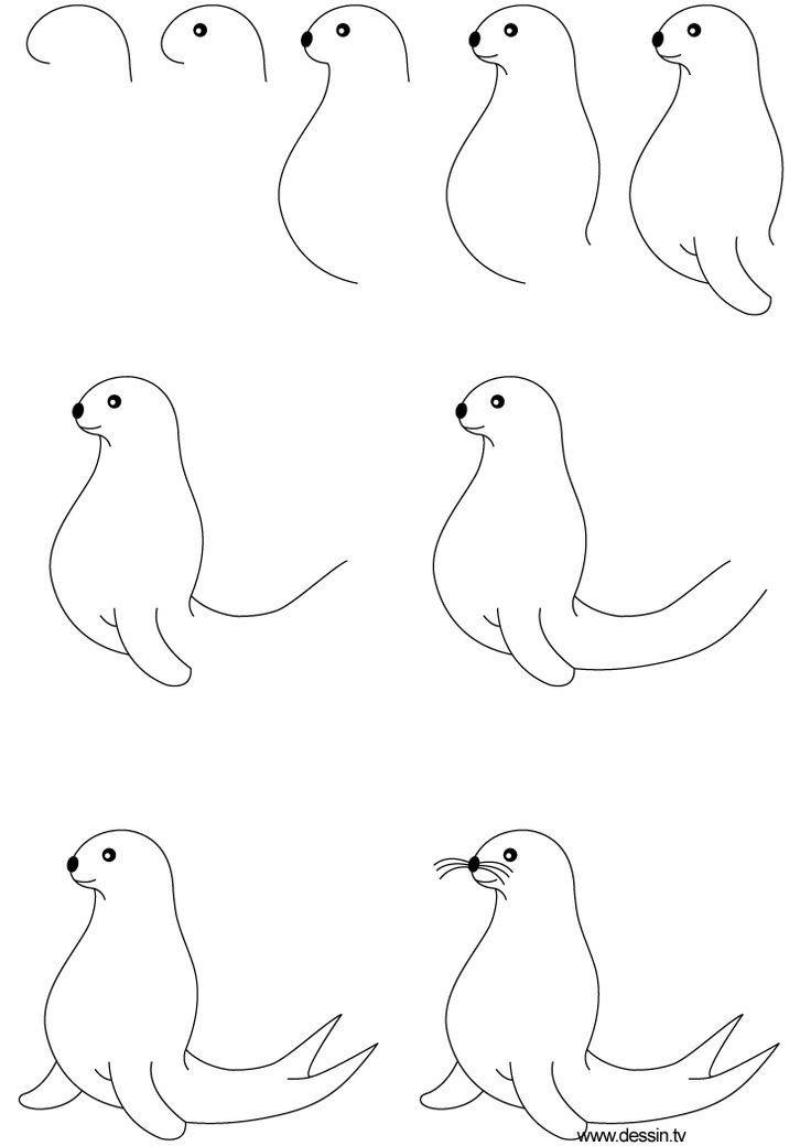 easy cute cartoon seal