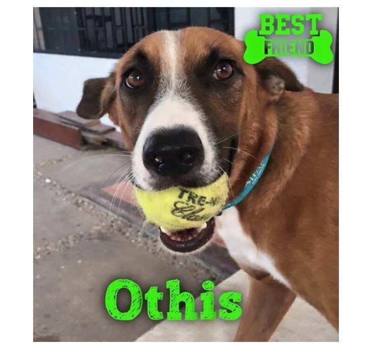 Available Dogs – Misty Creek Dog Rescue