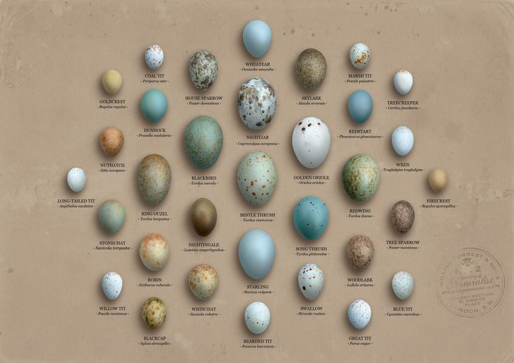 Do you remember the last time you saw a nest of eggs as you wander through a forest or walk around your garden? Were you able to identify which bird they belong to? Hopefully, these charts that we found at Scientific Illustration and Data Deluge will help you next time. Many thanks to Scientific Illustration and …