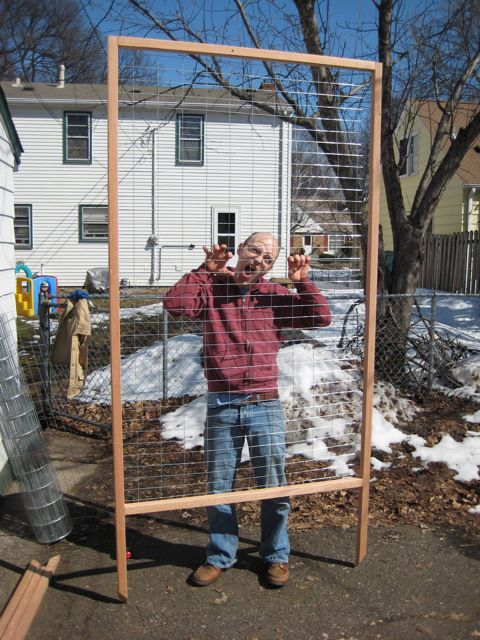 Wire trellis for peas or clematis.