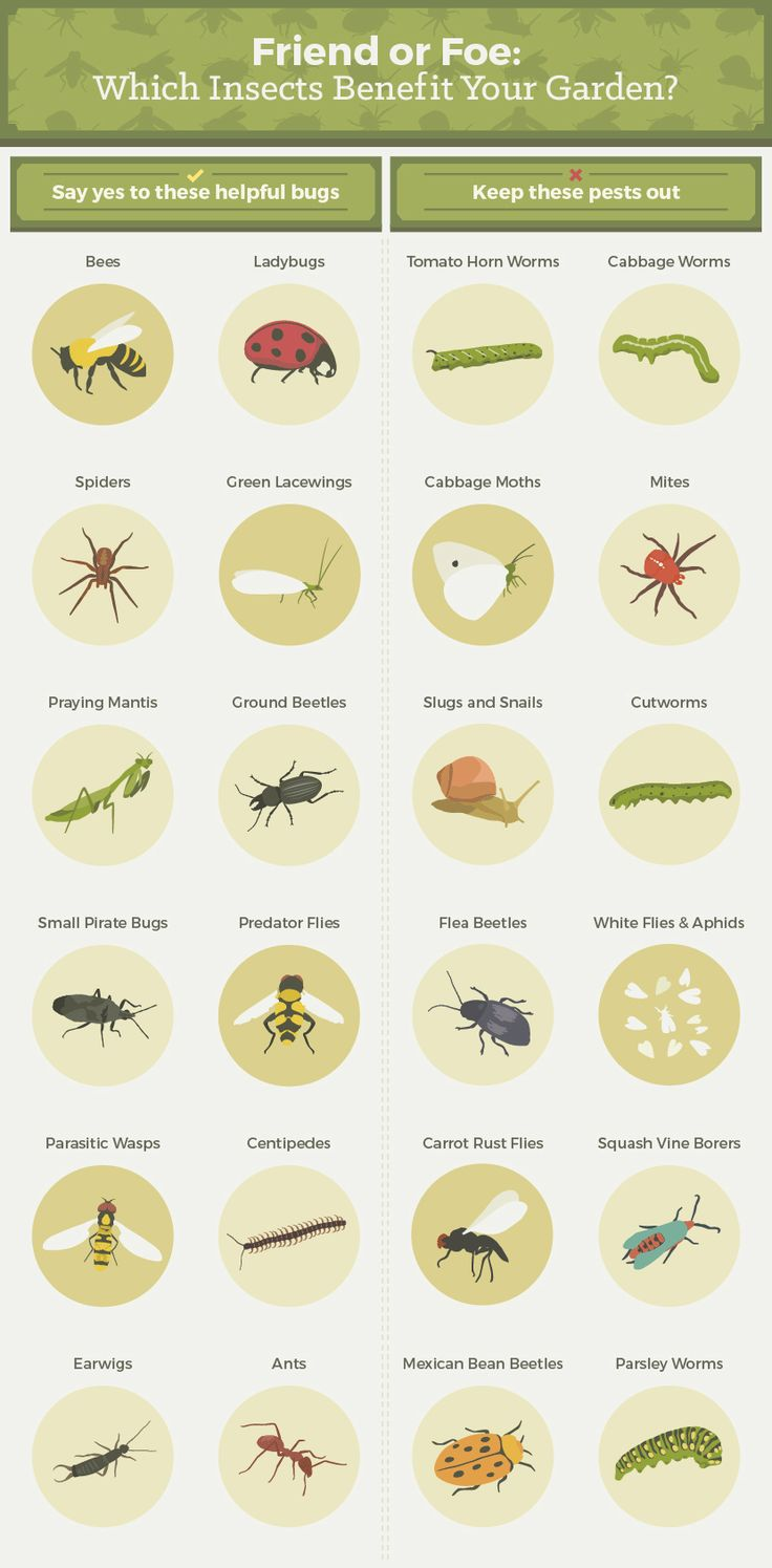 Insects That Benefit The Garden