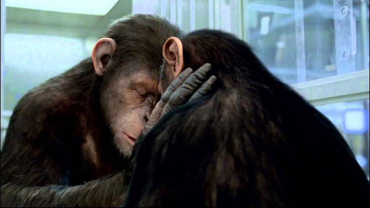 ➠ Voir La Planète des singes : l'affrontement Streaming Film en Entier VF Gratuit