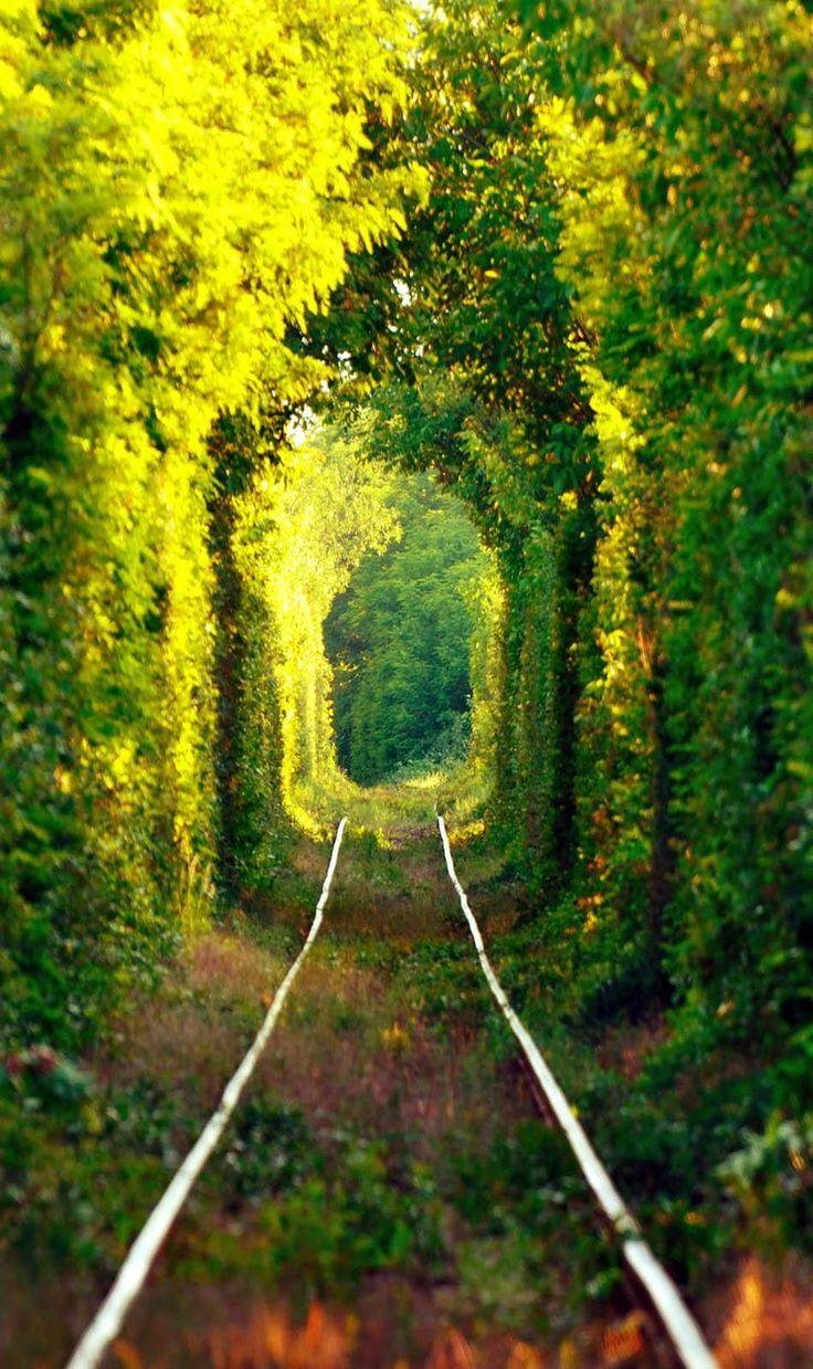 """Túnel natural increíble conocido como Túnel del  """"AMOR"""", formado por los árboles en Rumania."""