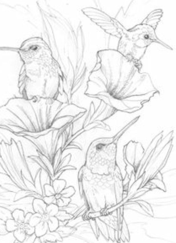 616 best Clipart Birds images on Pinterest Drawings Coloring
