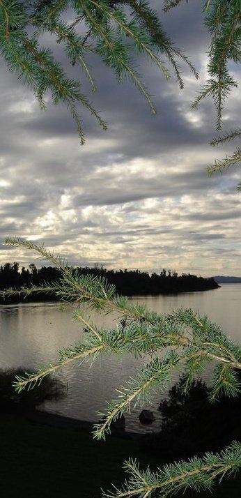 Ñilque - Lago Puyehue, X Región de Los Lagos. Chile.