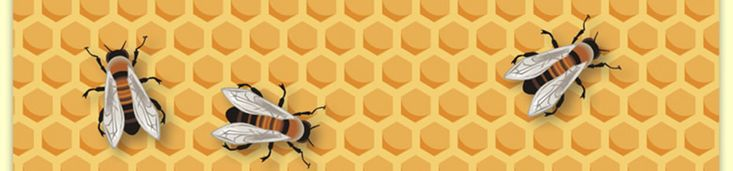 Sacramento Beekeeping Supplies - Beeswax, Honey, Pollen, Royal Jelly, and Propolis Prices