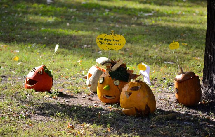 In the spirit of Halloween weekend, here are a few more jack-o'-lanterns I photographed last year at the Pumpkin Festival in Kikinda, Serbia.