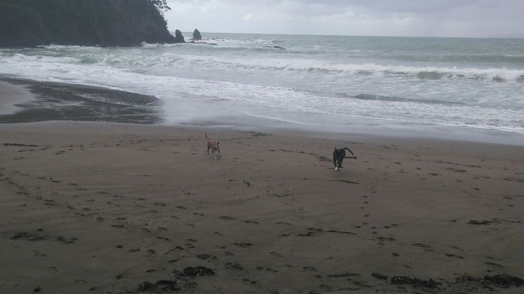 Only dogs on the beach on this stormy Winter's day.