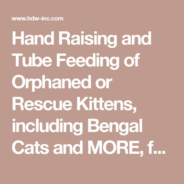 Hand Raising and Tube Feeding of Orphaned or Rescue Kittens, including Bengal Cats and MORE, from Foothill Felines (exotic domestic Bengal cat breeder).
