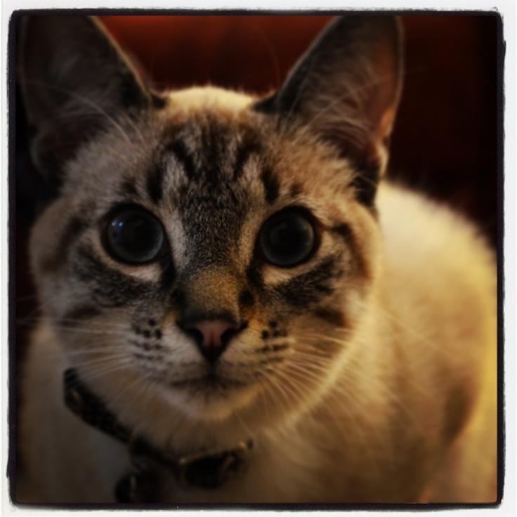 Matilda, Cat